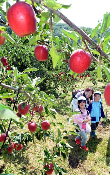 830観光農園・リンゴ・沼田