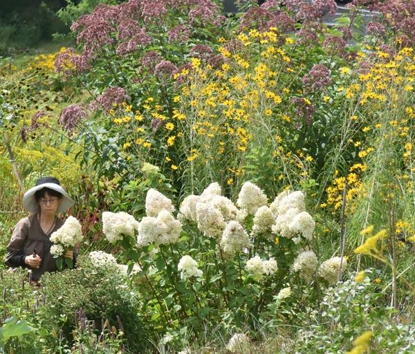 905中之条 花の摘み取りを楽しむ観光客
