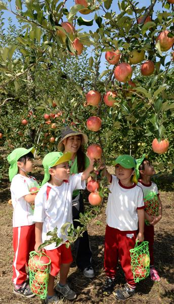 905開園式に招かれ、リンゴ狩りを楽しむ園児たち