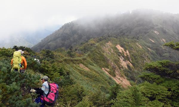 906上ノ間山と忠治郎山の両山頂間の稜線を進む調査隊