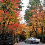 赤や黄色に染まる「華蔵院の坂」の木々