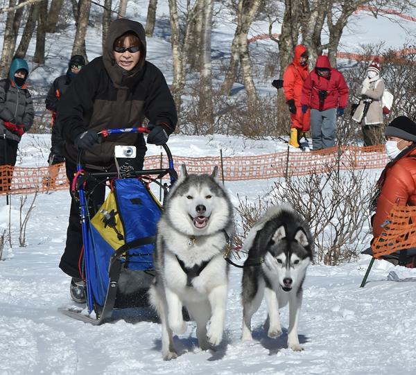 0206赤城山雪まつり 犬ぞりレース