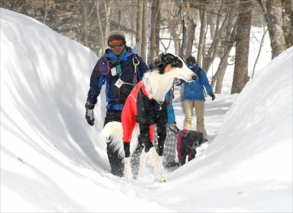 雪に覆われた余笹川の源流を歩く参加者と愛犬=19日午前11時、那須町大島