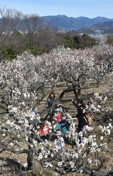 2023桐生南公園の梅