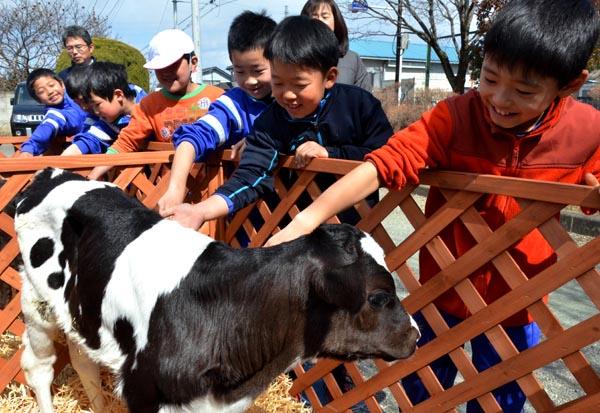 0309子牛に触れ、命の大切さを学ぶ児童
