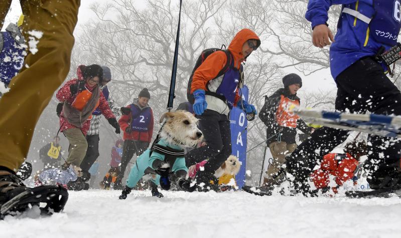 愛犬と共にコースを走る参加者たち